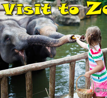 A Visit to Zoo