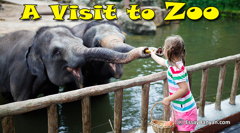 Essay on A Visit to Zoo