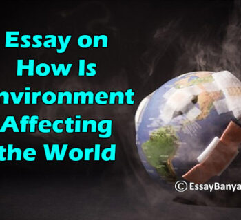 Essay on How Is Environment Affecting the World