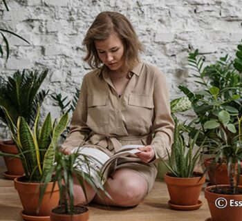 Why Plants are so Important for us