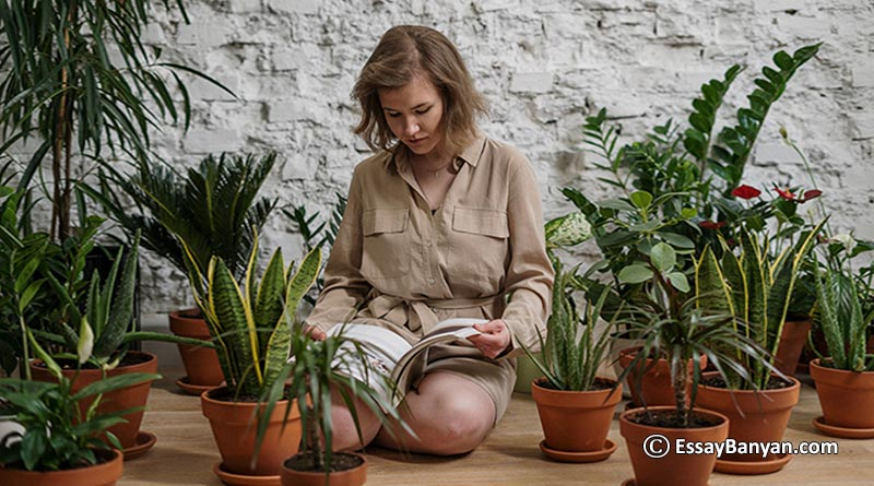 Essay on Why Plants are so Important for us